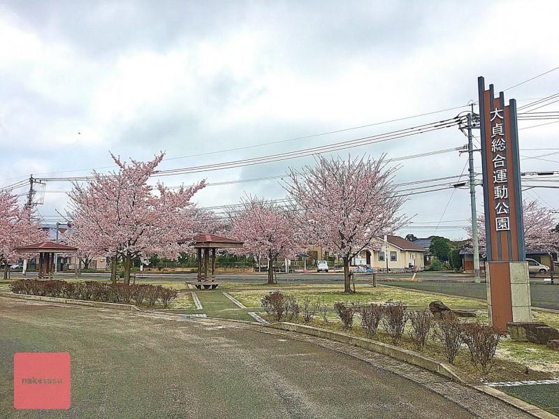 nakasusu.sakura020